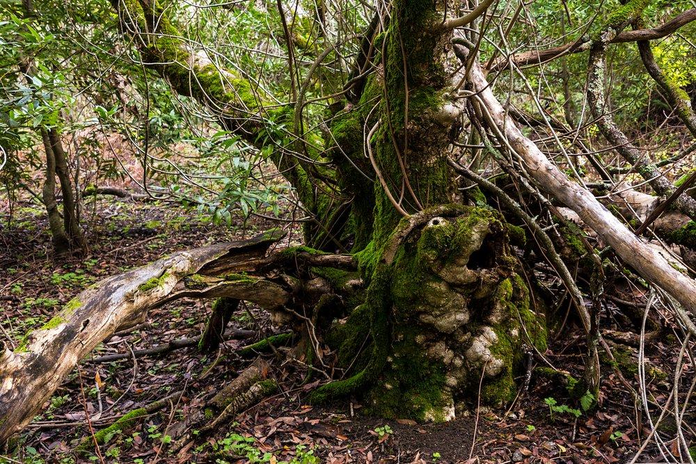 Oursan Trail-2.jpg