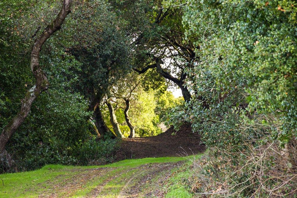 Oursan Trail-25.jpg