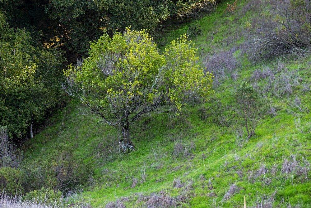 Oursan Trail-66.jpg