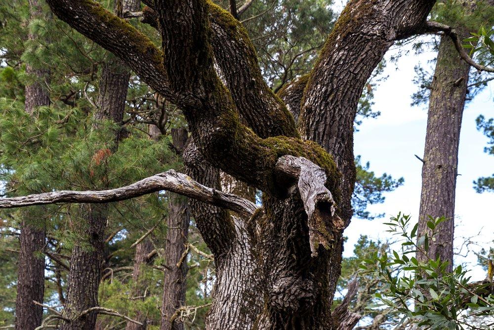 Old San Pablo Trail San Pablo Reservoir-29.jpg
