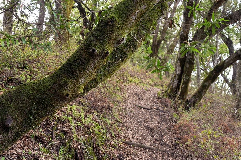 Old San Pablo Trail San Pablo Reservoir-41.jpg