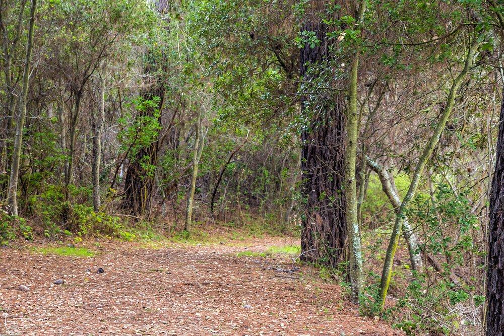 Old San Pablo Trail San Pablo Reservoir-50.jpg
