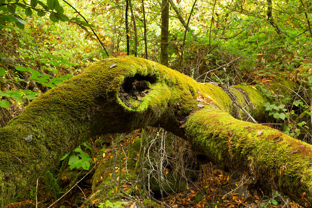 Pt Reyes Bear Creek Trail-5.jpg