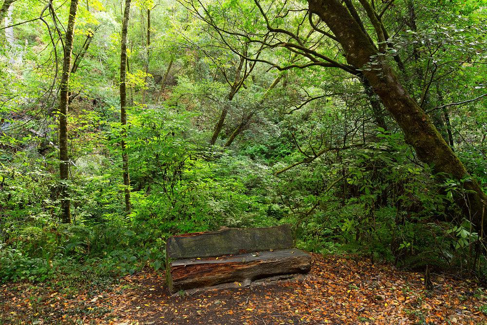 Pt Reyes Bear Creek Trail-4.jpg