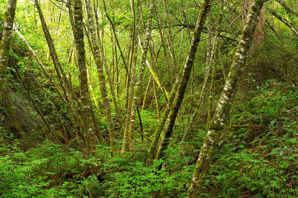 Pt Reyes Bear Creek Trail-7.jpg