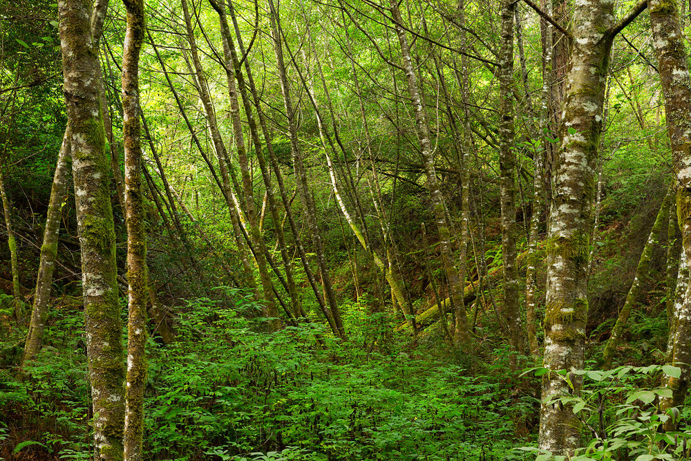 Pt Reyes Bear Creek Trail-8.jpg