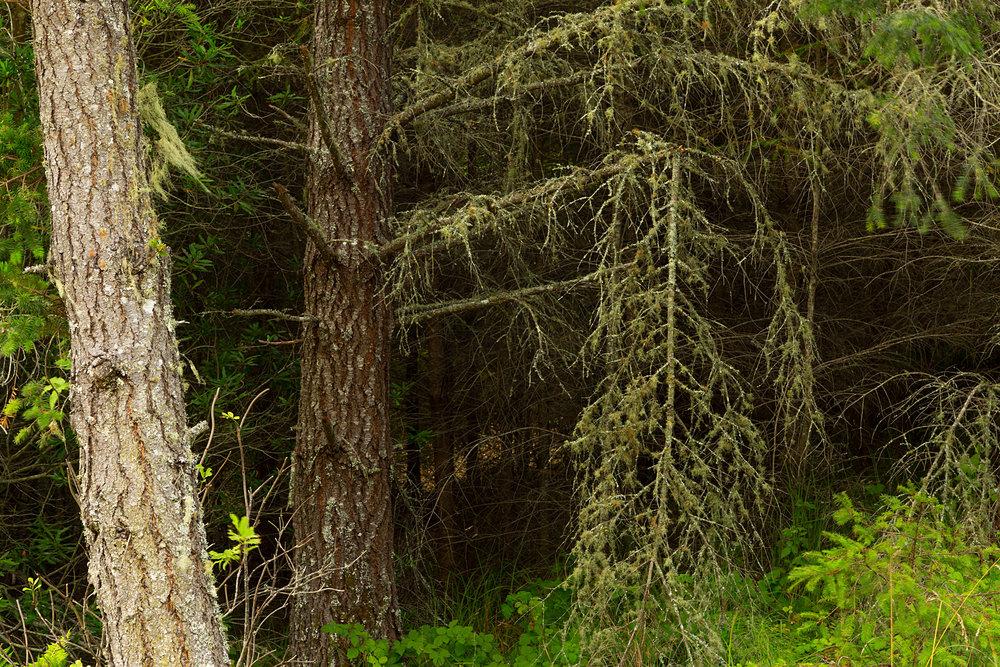 Pt Reyes Bear Creek Trail-11.jpg