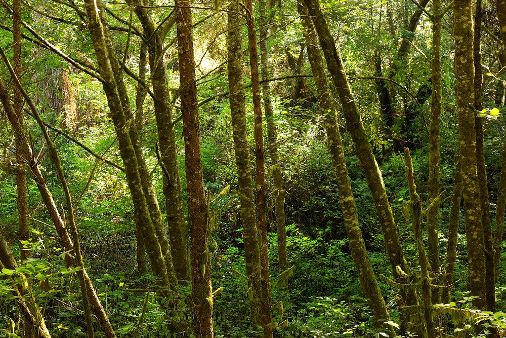 Pt Reyes Bear Creek Trail-16.jpg