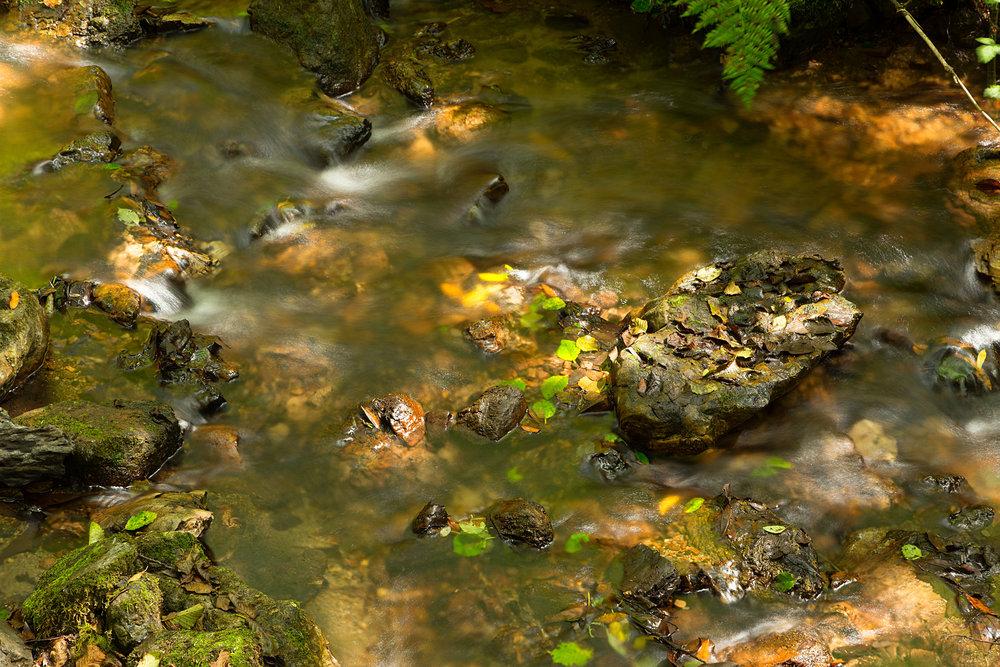 Pt Reyes Bear Creek Trail-27.jpg