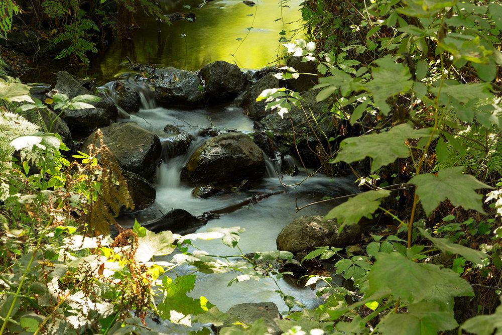 Pt Reyes Bear Creek Trail-29.jpg