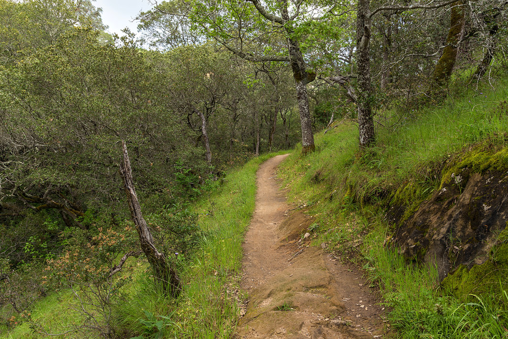 Madrone Canyon Trail-5.jpg