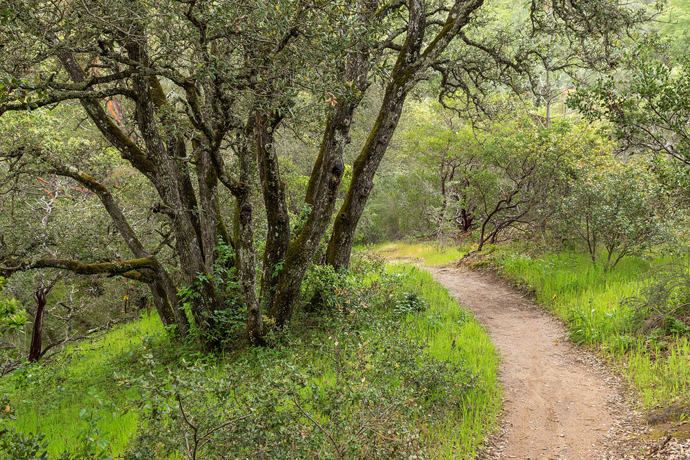 Madrone Canyon Trail-6.jpg