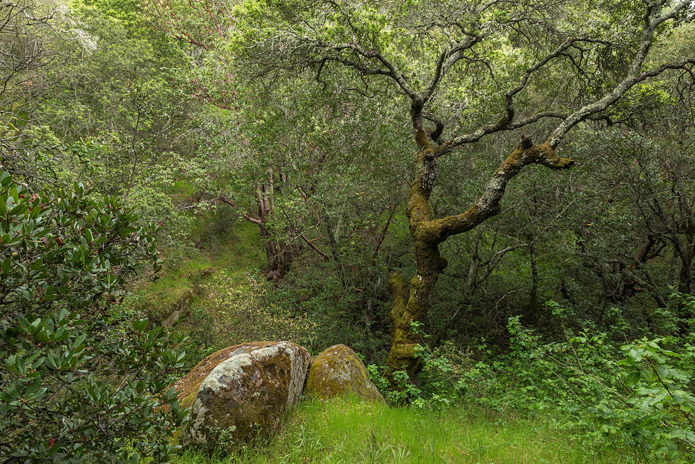 Madrone Canyon Trail-8.jpg