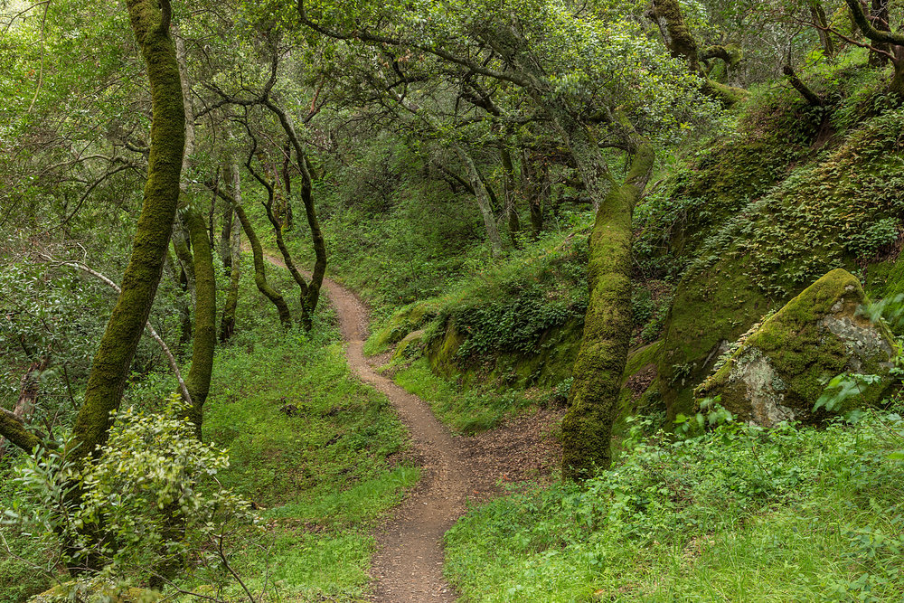 Madrone Canyon Trail-11.jpg