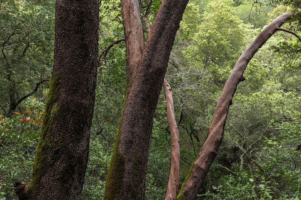 Madrone Canyon Trail-13.jpg