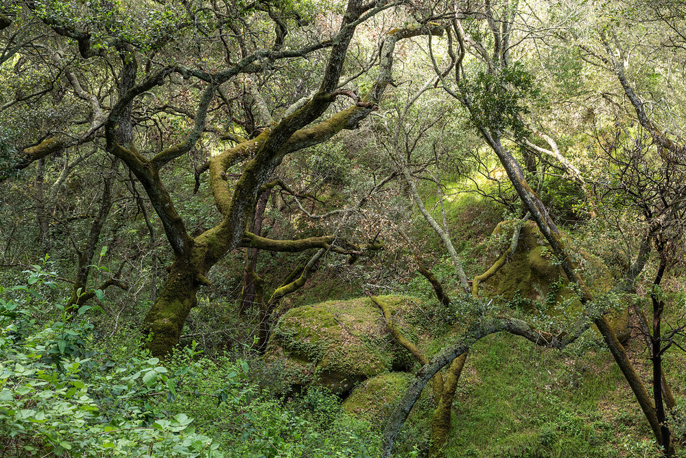 Madrone Canyon Trail-16.jpg