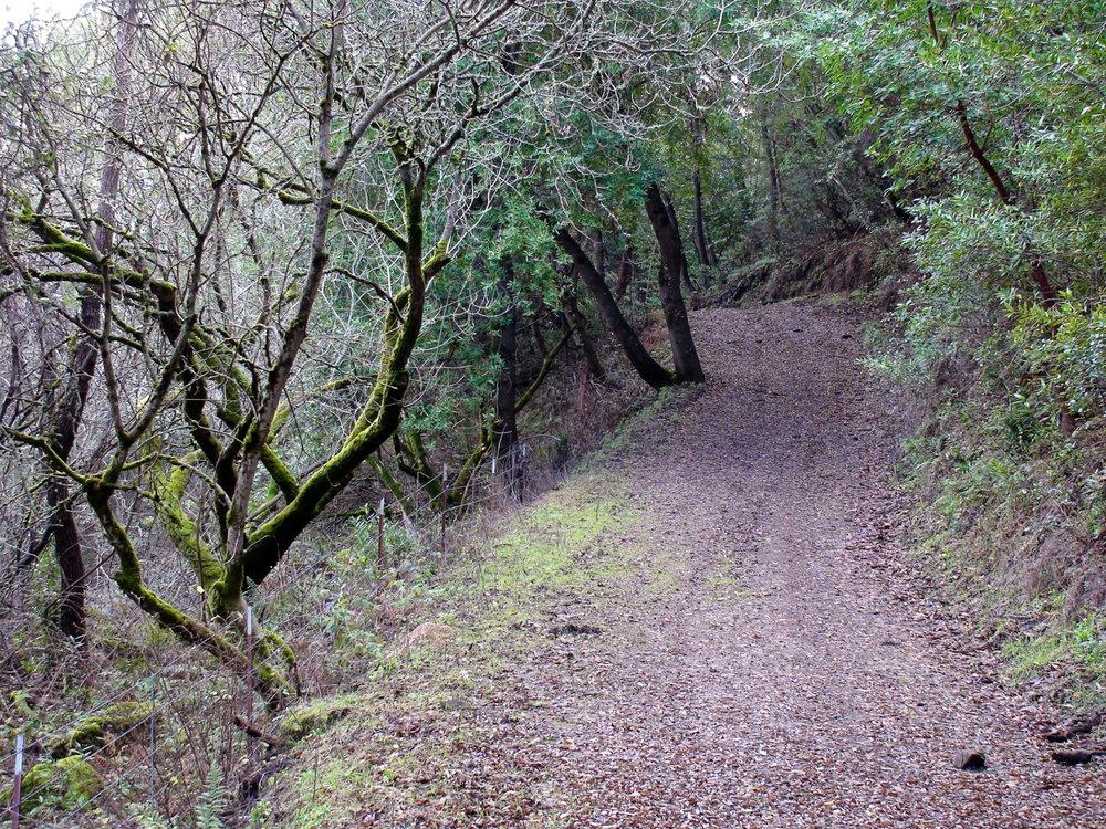 Rimer Creek_-17.jpg