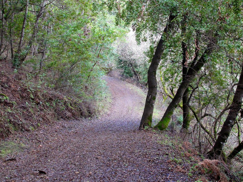 Rimer Creek_-18.jpg