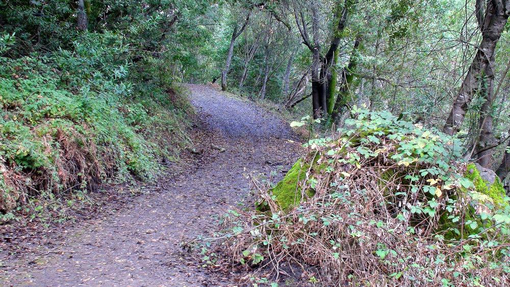 Rimer Creek_-19.jpg