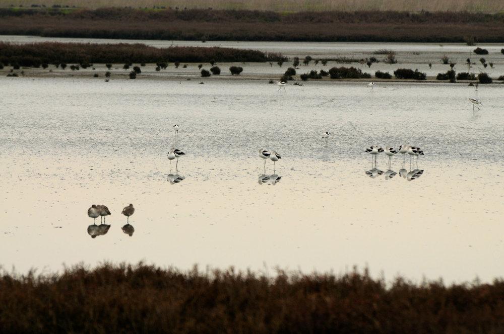 Hayward Cogswell Marsh-3.jpg