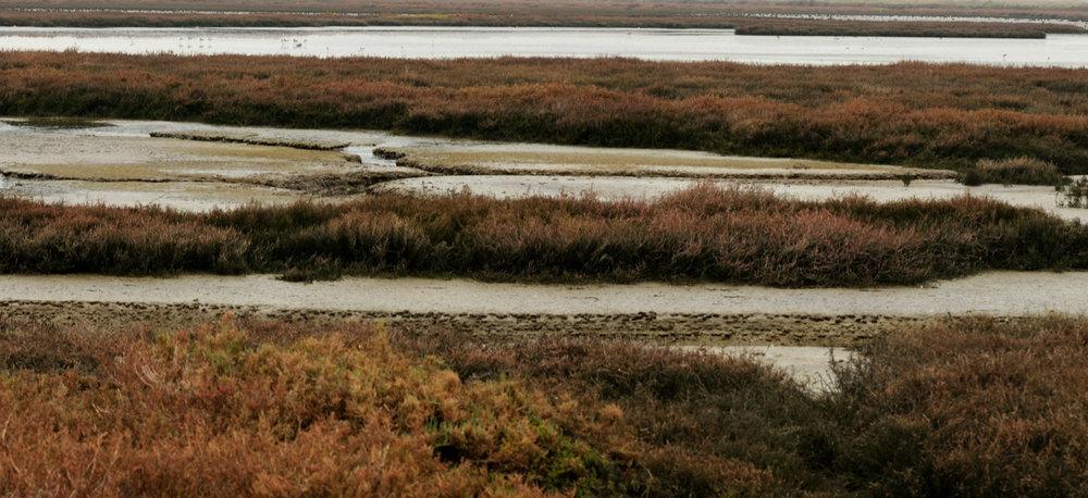 Hayward Cogswell Marsh.jpg