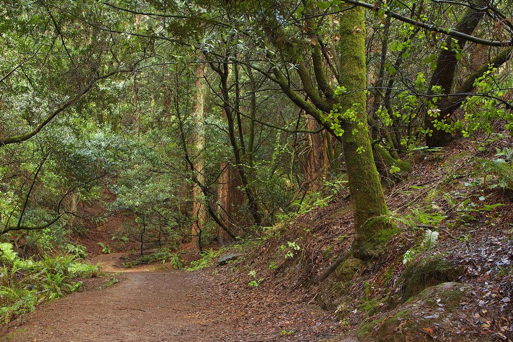 Redwood Regional Park-3.jpg