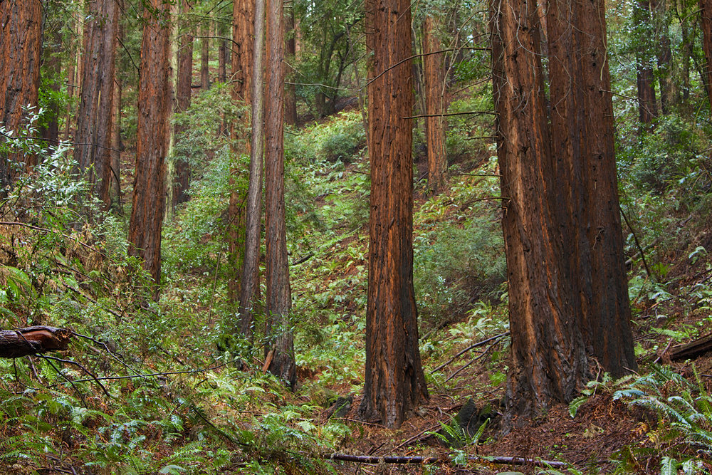 Redwood Regional Park-4.jpg