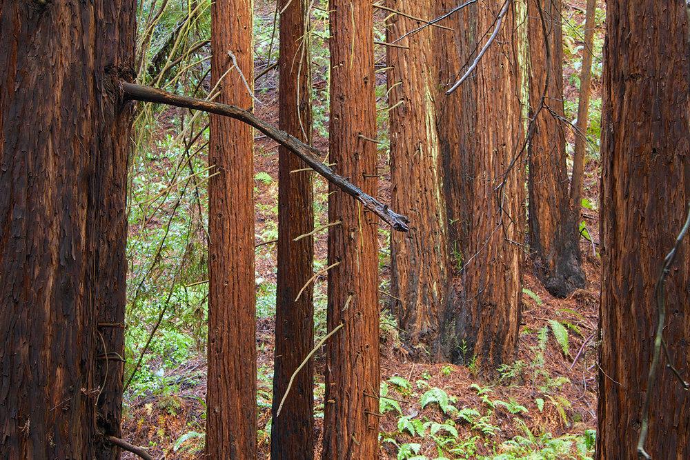 Redwood Regional Park-5.jpg