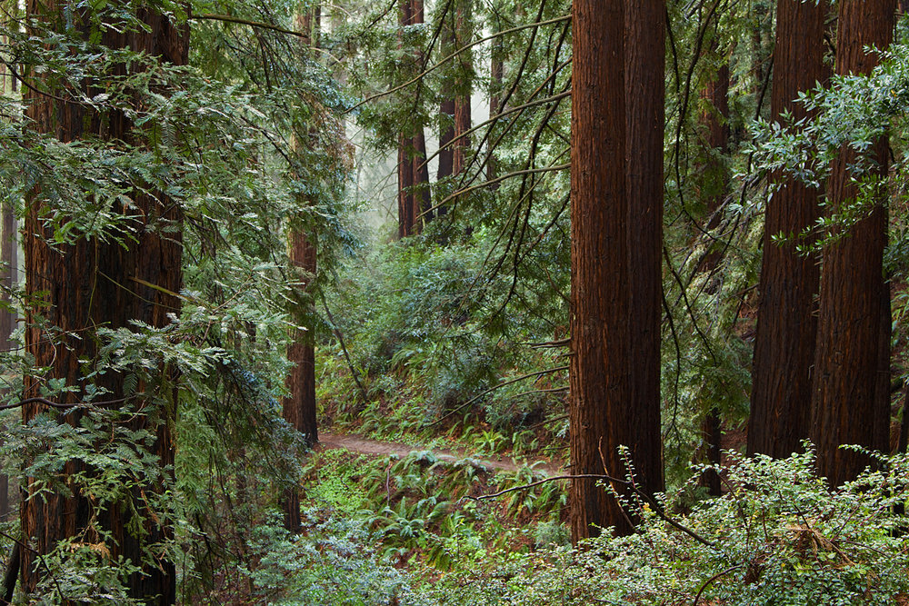 Redwood Regional Park-6.jpg