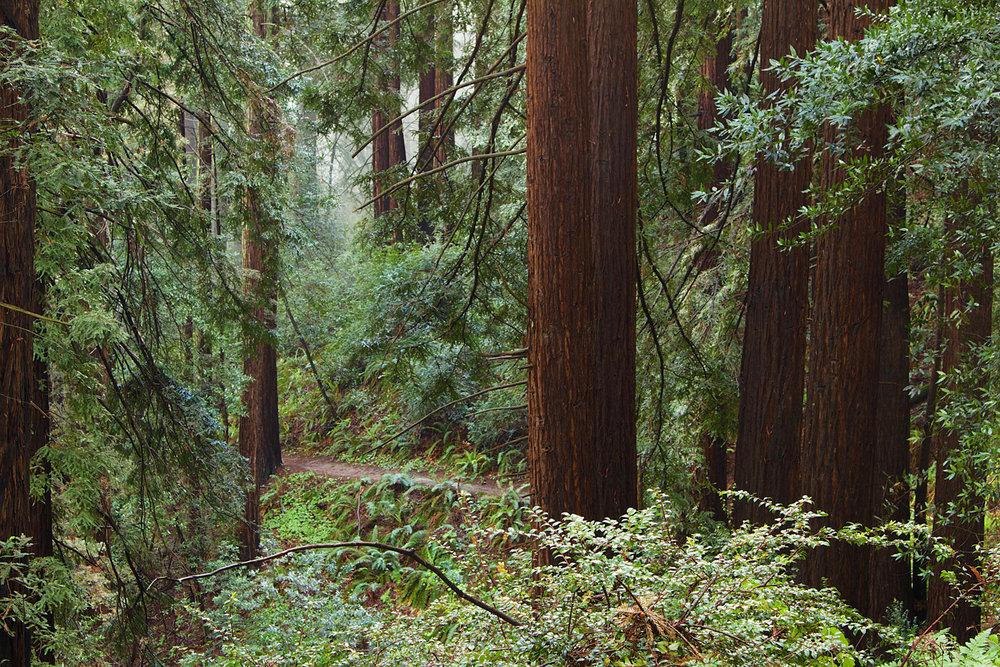 Redwood Regional Park-7.jpg