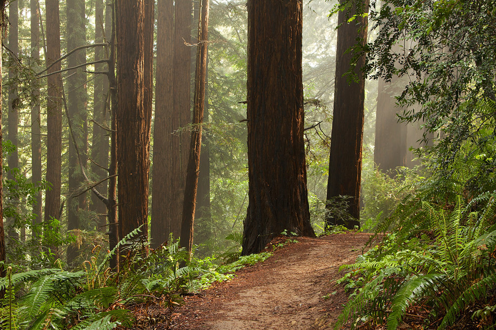 Redwood Regional Park-8.jpg