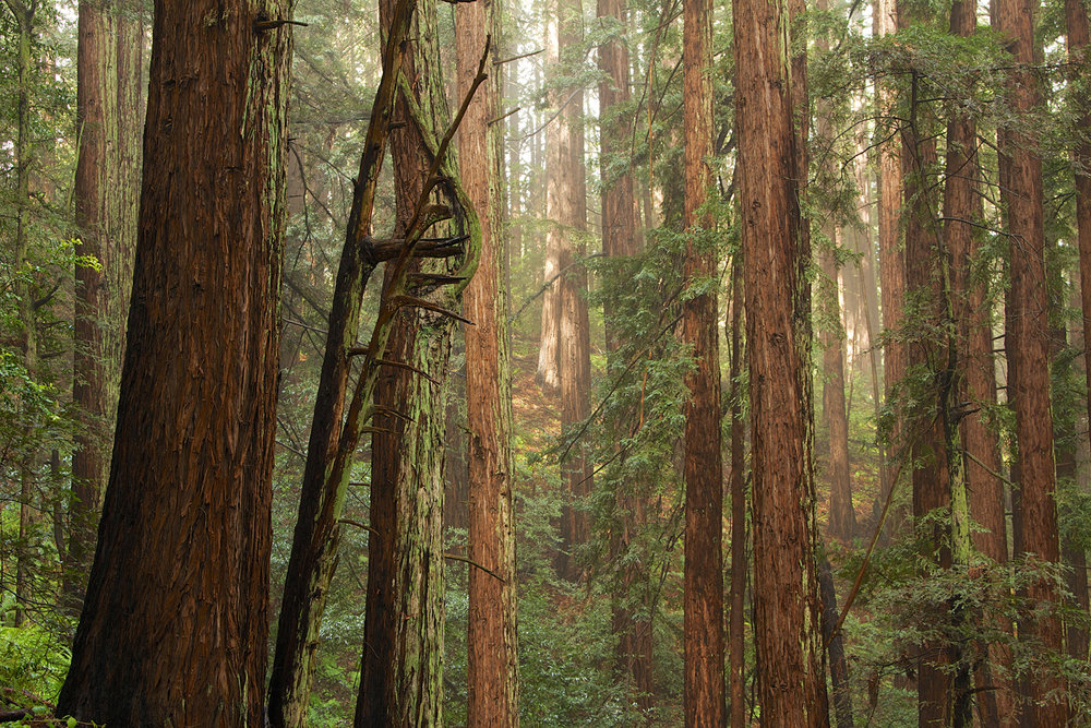 Redwood Regional Park-9.jpg