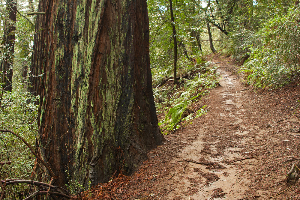 Redwood Regional Park-11.jpg