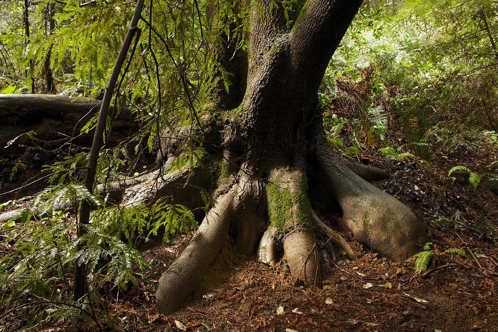 Redwood Regional Park-12.jpg