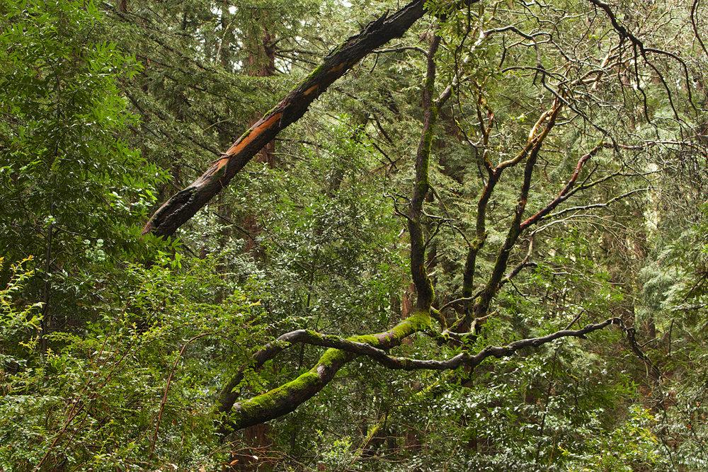 Redwood Regional Park-14.jpg