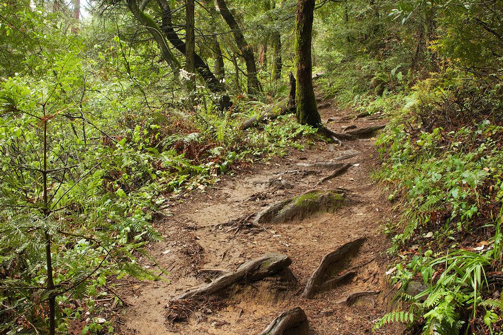 Redwood Regional Park-16.jpg