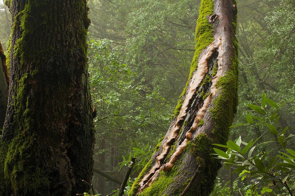 Redwood Regional Park-17.jpg