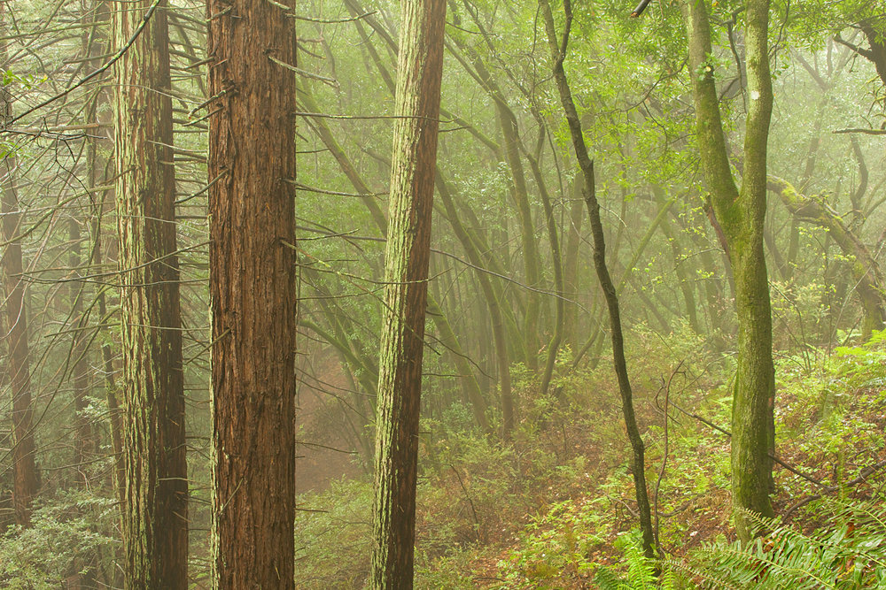 Redwood Regional Park-18.jpg