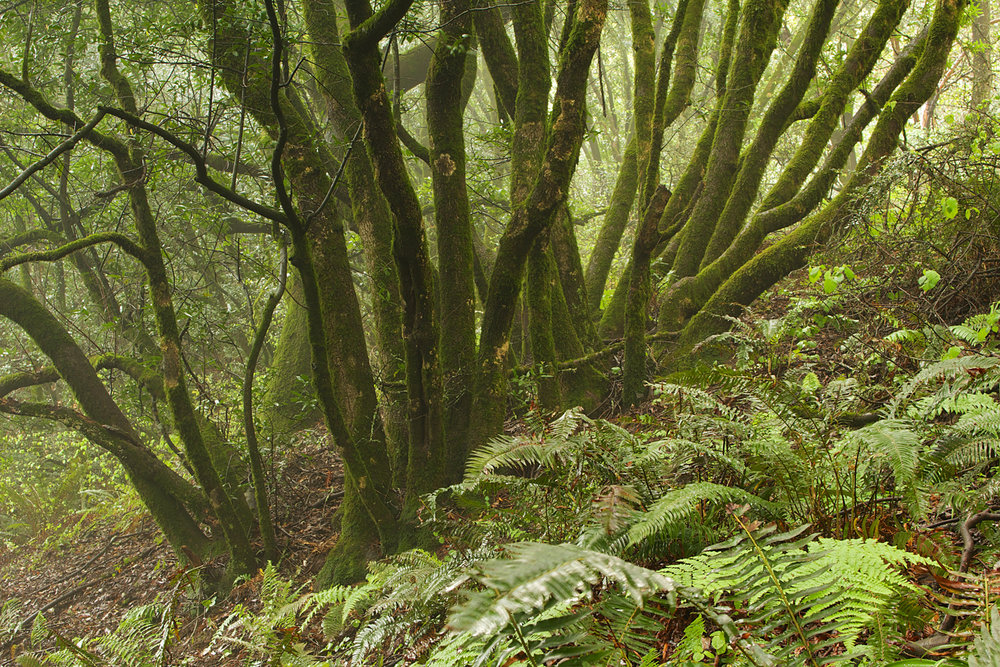 Redwood Regional Park-19.jpg