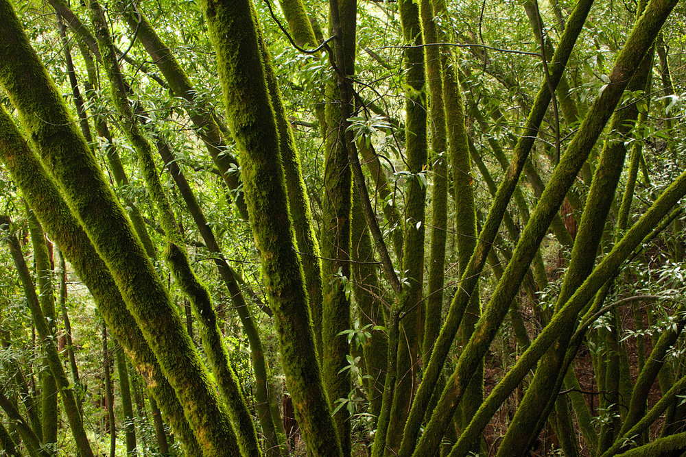 Redwood Regional Park-20.jpg