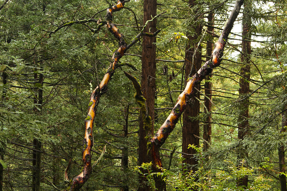 Redwood Regional Park-23.jpg