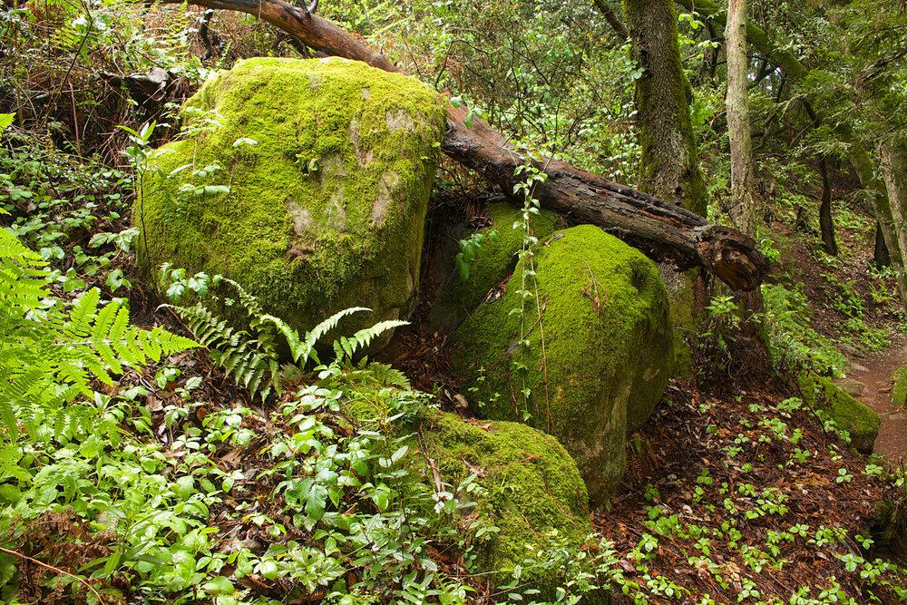 Redwood Regional Park-22.jpg