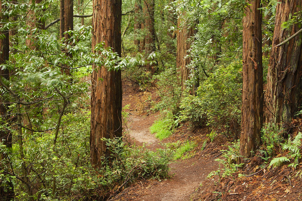 Redwood Regional Park-25.jpg