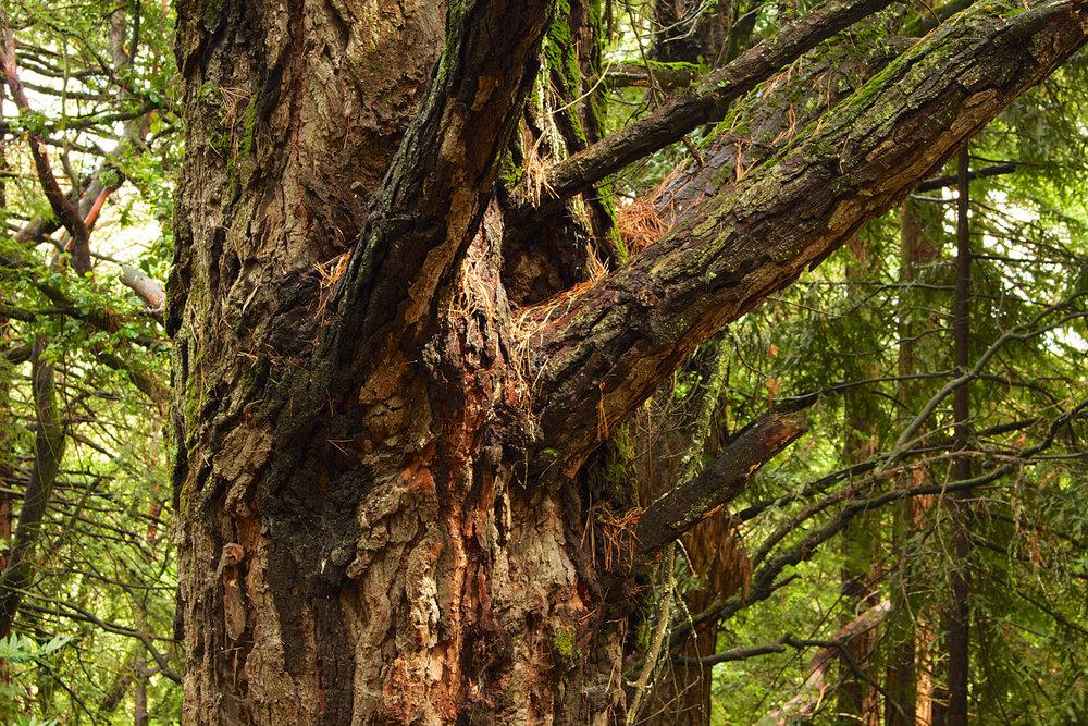 Redwood Regional Park-29.jpg