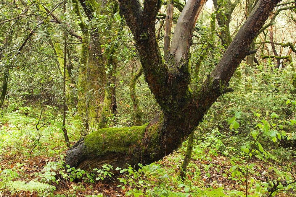 Redwood Regional Park-31.jpg