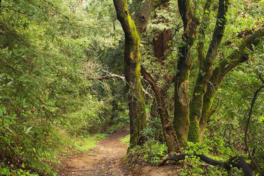Redwood Regional Park-33.jpg