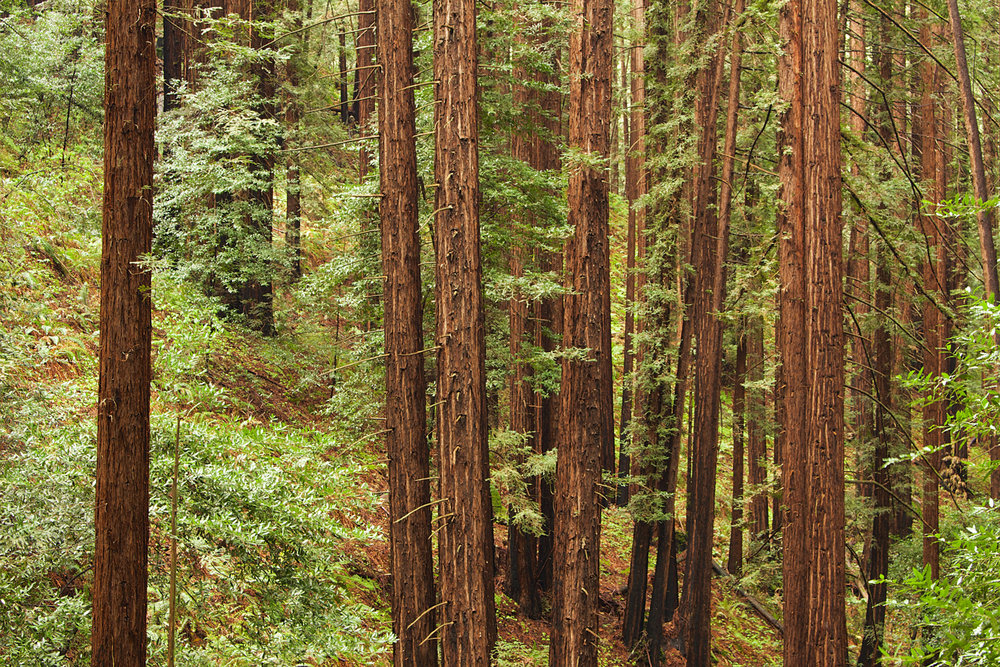 Redwood Regional Park-35.jpg