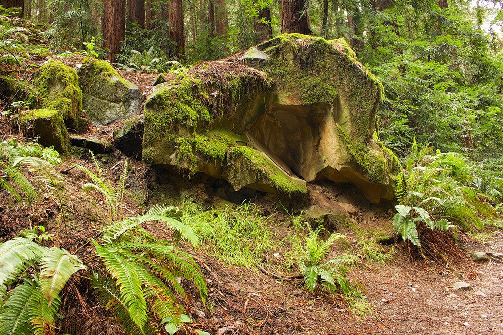 Redwood Regional Park-36.jpg