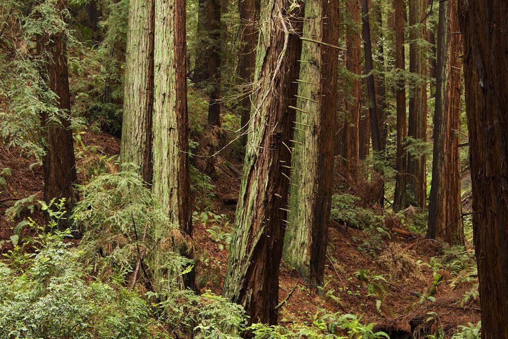 Redwood Regional Park-38.jpg