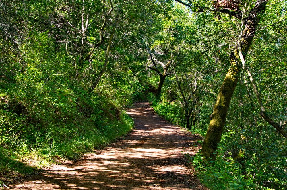 Mount diablo state park Tassajara.jpg